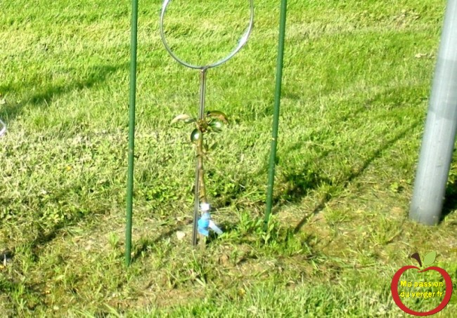 J'ai coupé le poirier à 40 cm du sol, pour faire démarrer de nouvelle branches pour former la palmette