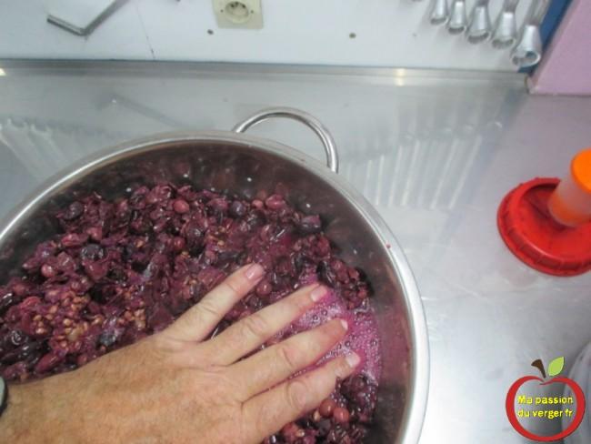 Avec les mains, on peut commencer à presser le marc de raisin.