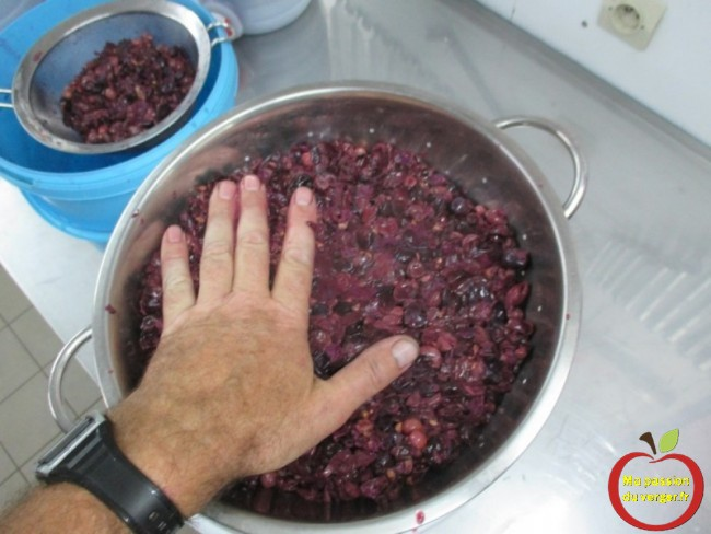 Pressage manuel du raisin pour faire son vin maison