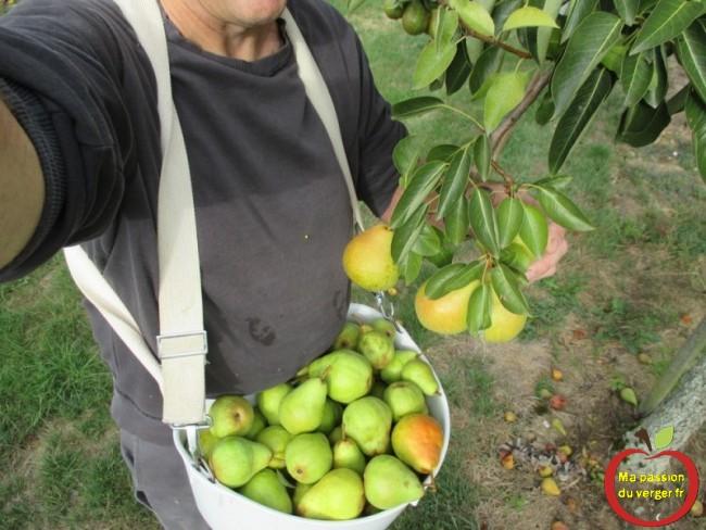 Panier de cueillette ventral, pour les fruits du verger