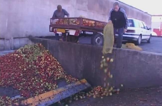 Coopérative Jucoop- Campagne pomme à jus- achat pomme à jus- vente de pomme de table