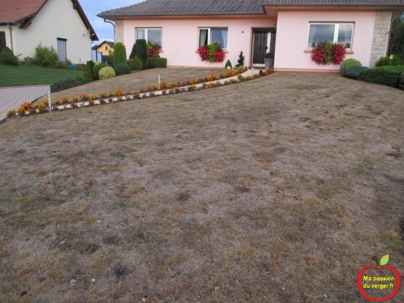 Refaire son gazon ou sa pelouse ma passion du verger - Preparer son terrain avant pelouse ...