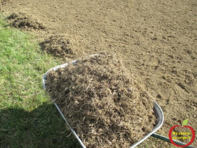 Ramasser les vieilles touffes d'herbe et les cailloux, après le ratissage avant de semer le gazon - retourner gazon