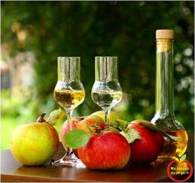 Comment réaliser une bonne eau-de-vie de pommes-comment faire une eau-de-vie de cidre- jus de pomme fermenté pour alcool de pomme