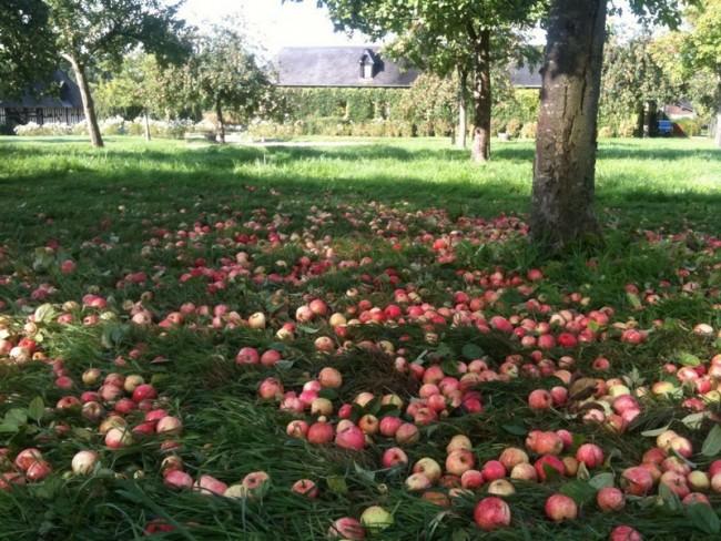 pomme à jus