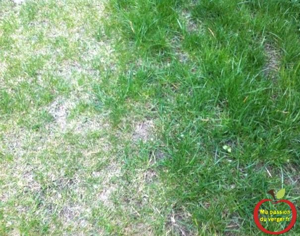 retirer les mauvaises herbes
