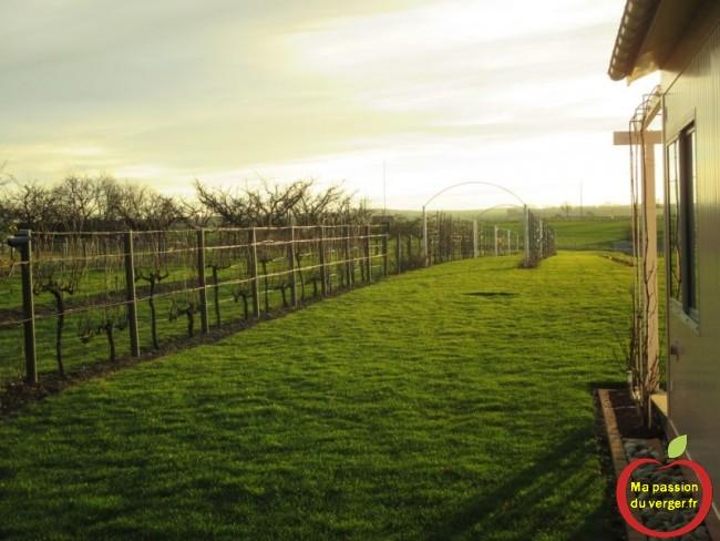 palissage pour vigne avec poteau pvc ma passion du verger