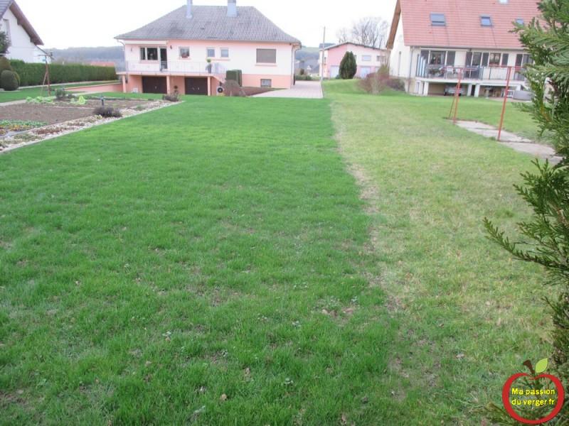 Refaire son gazon ou sa pelouse ma passion du verger - Quand planter le gazon ...