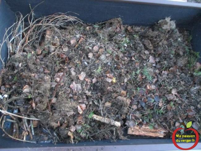 Je rajoute une petite couche de 3 à 5 cm de mulch et de reste de tonte dans le potager en carre
