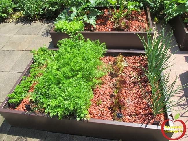 plantation d'un potager en carré