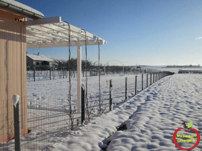 ma treille ou pergola avec vignes en hiver- treille avec vigne sous la neige - pergola en hiver