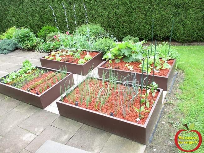 Les premiers légumes du potager surélevé