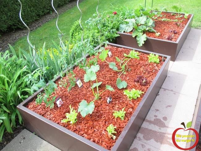 Plantation en bac sur terrasse