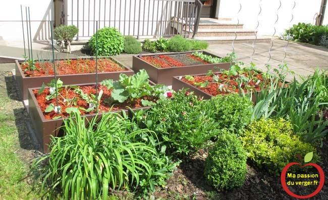 Plantation potager carré en permaculture