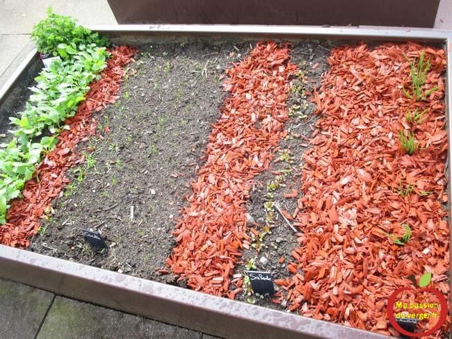 Semis du potager en bac