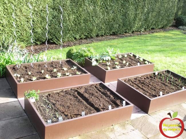 Semis et plantation du potager en carré