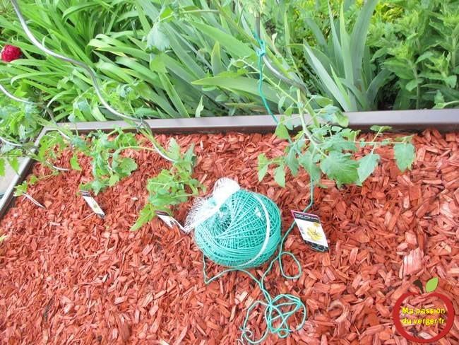 Utiliser du lien souple pour les tomates- liens souple pour attacher tomates