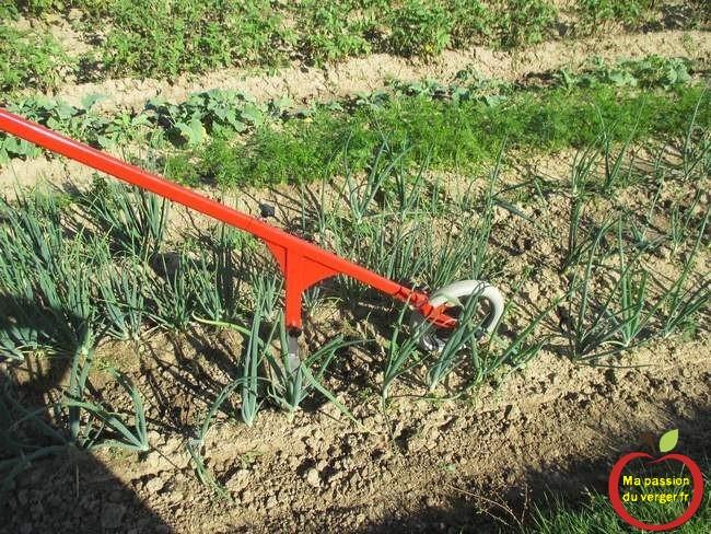 binage-au-potager avec un cultivateur à pousser. -le binage mecanique du potager- binette à roue- pousse_pousse- sacleur à roue- désherbage manuel potager- binage potager.
