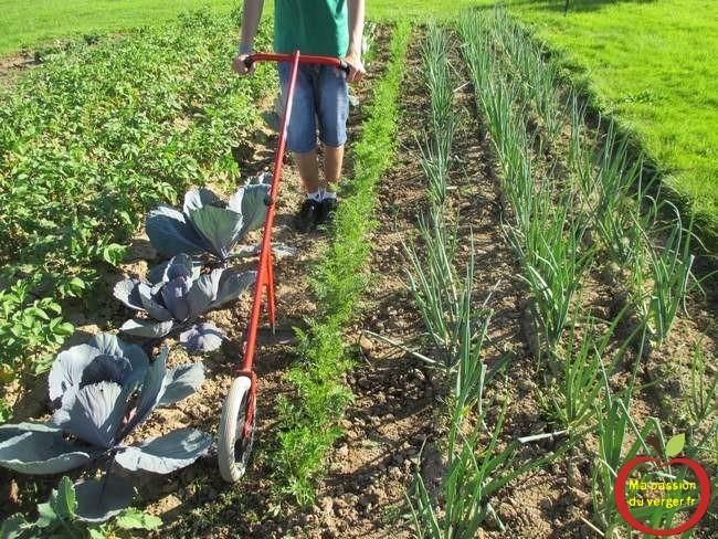le-sarclage-au-potager avec une cultivateur à pousser. le binage mecanique du potager- binette à roue- pousse_pousse- sacleur à roue- désherbage manuel potager- binage potager.