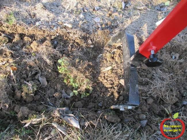 sarclage-et-desherbage-manuel-dans-le-jardin-et-au-verger