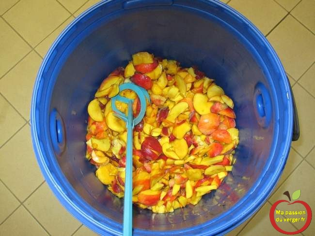 broyage-peche-pour-eau-de-vie-mise en fût des fruits pour alcool - gnole- schnaps - fruits alcool - pêche, nectarine pour alcool - regrevudnoissapamegres