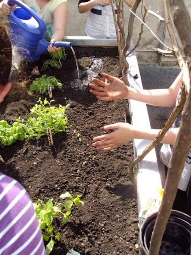 La plantation du potager surélevé, par les enfants de l'école. Un vrai moment de partage pour transmettre la passion du potager, avec les élèves de l'école.- potager à l'école-Bac potager en permaculture pour l'école - Permaculture à l'école- jardinage à l'école avec les élèves. permaculture à l'école- bac pour potager à l'école.
