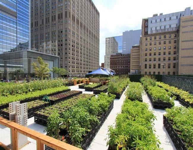 Potagers en carré permaculture en ville-potager en ville- la permaculture arrive en ville- la culture permaculture en ville- la culture de légumes bio en ville- comment planter des légumes bio en ville-potager bio en ville sur les toits immeubles- Planter des légumes bio sur le toit- permaculture sur le toit