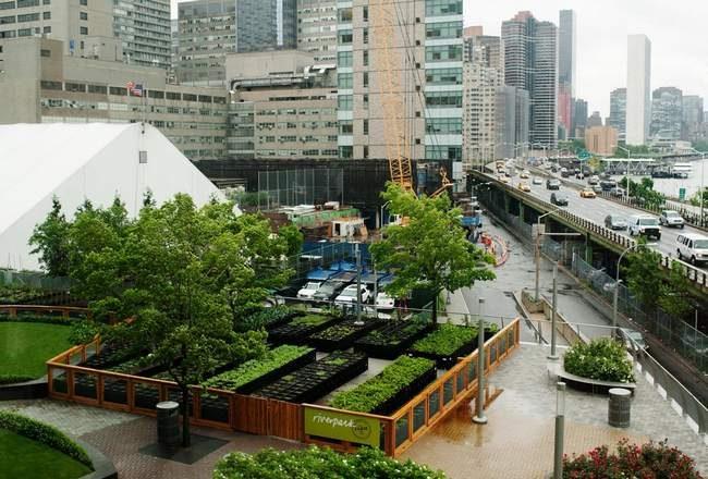 Potagers en carré permaculture en ville-potager en ville- la permaculture arrive en ville- la culture permaculture en ville- la culture de légumes bio en ville- comment planter des légumes bio en ville-potager bio en ville sur terrasse