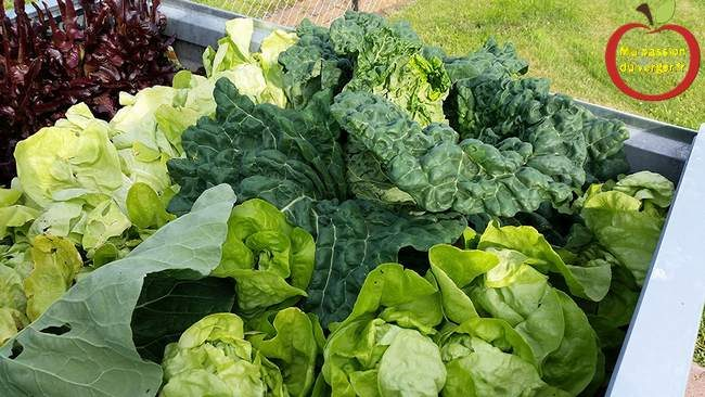 Récolte abondante grâce à la permaculture en bac- permaculture en bac acier- permaculture en bac alu-