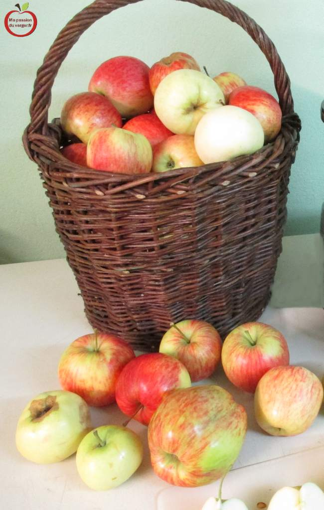 Comment faire un bon jus de pomme- variétés pour jus de pomme- pomme pour jus bio-