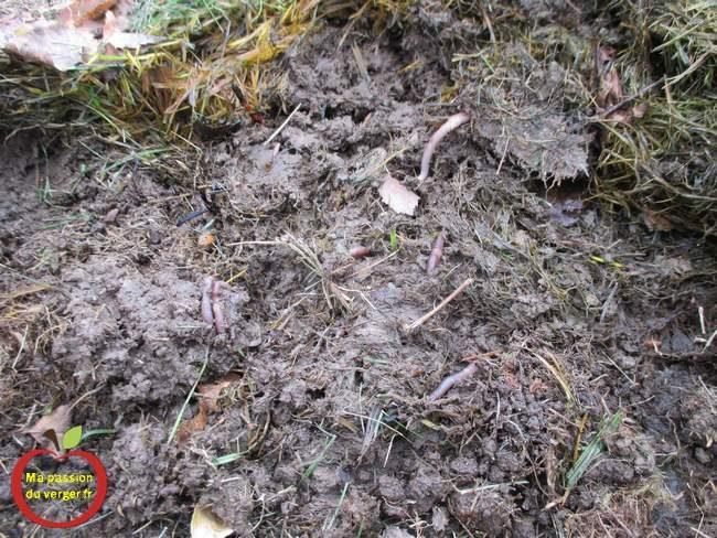 On ne le dira jamais assez : pour qu'un sol soit fertile, il doit être vivant! Pour favoriser le développement de la vie dans votre sol, il faut le nourrir ou plutôt nourrir les millions de micro-organismes qui le peuplent et en font la richesse. Pour ce faire, il faut couvrir votre sol en apportant en surface de la matière organique qui sera petit à petit mangée, digérée et transformée en humus par les organismes vivants du sol parmi lesquels l'indispensable et au combien précieux ver de terre!