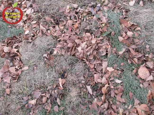 Le paillis végétal en automne est le plus intéressant, car il apporte des éléments nutritifs à la microfaune et au sol et va améliorer votre fertilité et donc votre rendement. Vous pouvez le faire plusieurs fois par hiver, car en quelques semaines, il n'y a plus rien, donc à chaque fois, donc vous pouvez remettre une couche de 5 à 10 cm.