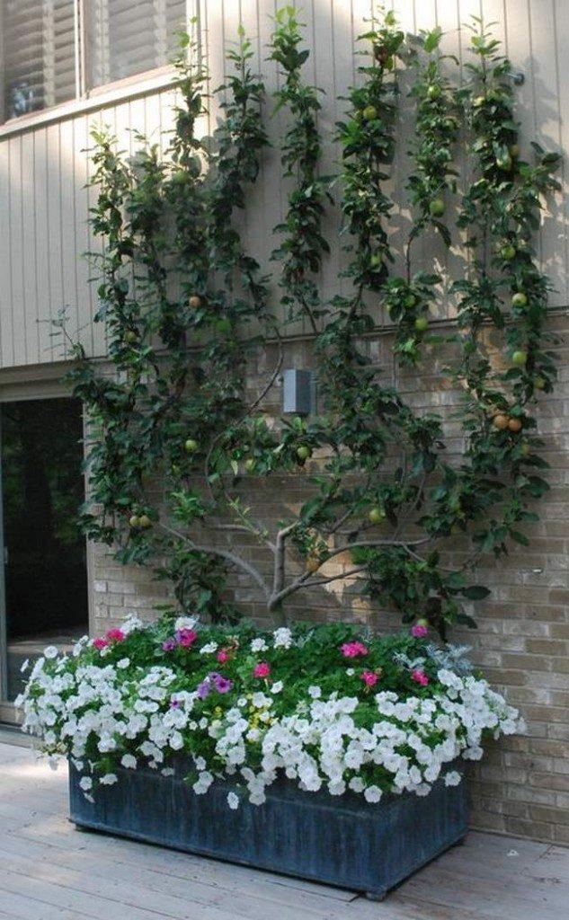 Planter arbre fruitier en bac ou en jardinière- plantation arbre fruitier en permaculture- plantation arbre fruitier terrasse ou balcon - cultiver arbre fruitier en pot