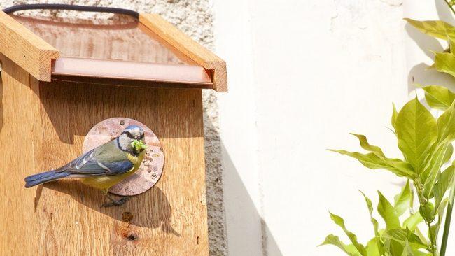 mettre un nichoir dans le jardin - nichoir dans le verger- nichoir pour la lutte biologique- comment installer un nichoir- comment fabriquer un nichoir.