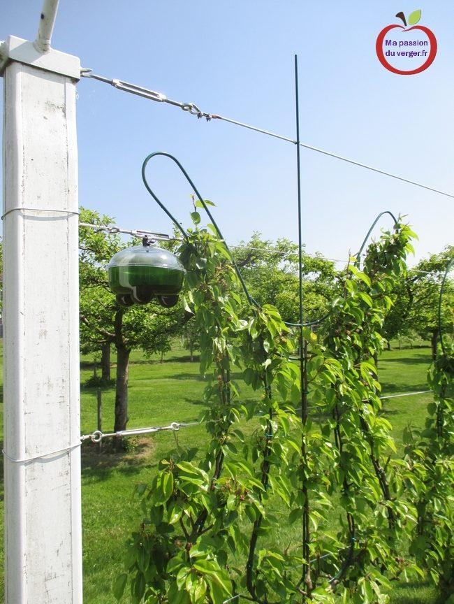lutte préventive contre les guêpes et les frelons- piège efficace contre les guêpes et les frelons quand installer les pièges à guêpes- enlever nid de guêpes- attractif guêpes et frelons- comment faire un pièges à guêpes- attractif pour reine de guêpes et frelons