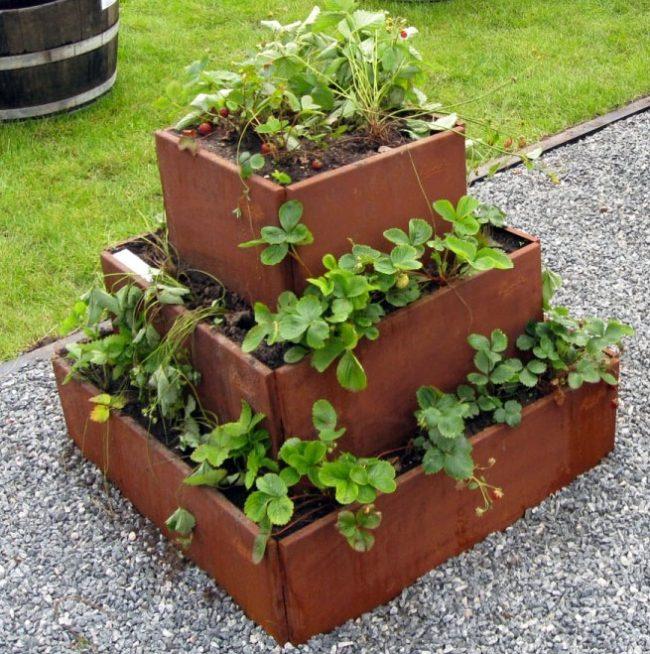 Tour à fraisiers en acier rouillé- tour à fraisier en façon permaculture- fraisiers en permaculture- fraisiers en bac potager- planter des fraisier en potager surélevé- fraisiers dans carré potager-