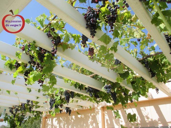 Construire une treille pour la vigne. | Ma passion du verger
