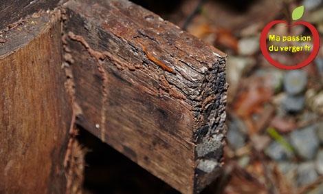 remplacer un bac potager carré en bois- comment remplaccer un bac potager en bois- jardin potager en bois- bacs potager en bois pourri- entretien potager en bois- durabilité potager en bois- potager en bois surélevé- faire un potager en bois bio- fabriquer un potager en bois-