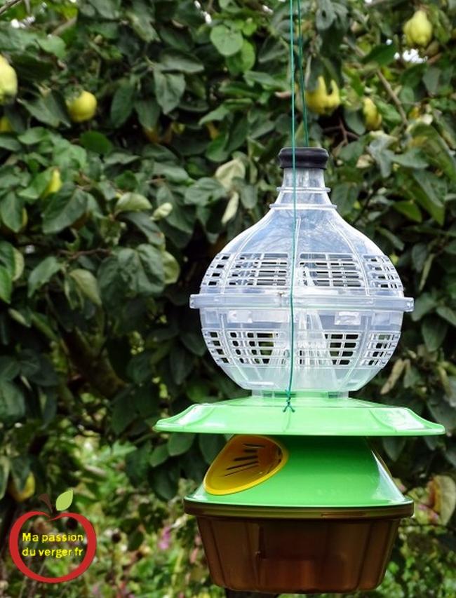 Nouveau piège à frelon asiatique - pièges à frelons- lutter contre frelon asiatique- protection des abeilles contre le frelon asiatique- attractif frelon asiatique-