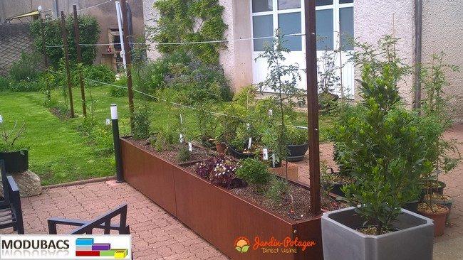 I le foie saucisses-Arbre I Graines Semences Bac à plante balcon terrasse exotique