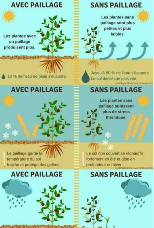 l'efficacité d'un paillage- pourquoi faire un paillage au potager- faire un paillage dans le potager surélevé- paillage pour potager en carré-paillage au potager en permaculture- comment faire un paillage en permaculture-permaculture -paillage potager