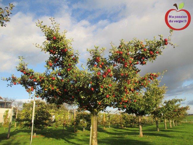 Mais il y a une autre solution aussi efficace, c'est le filet anti-insecte, pour les grands arbres. (voir ci-dessous)